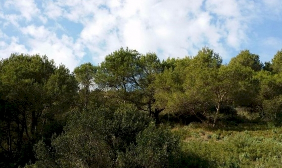 Plot with sea-view in Begur | 11021-2-570x340-jpg